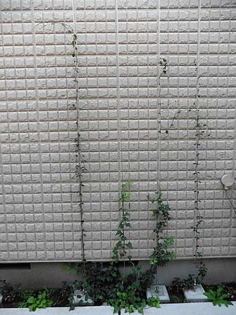 壁面緑化中。植物は環境を考え郷土種を用い、種のバランスも考慮