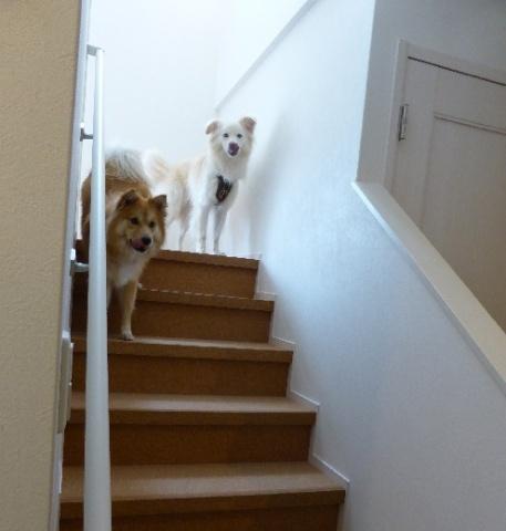 犬の安全面を考え、階段の踏み面や蹴込にコルク貼りを採用