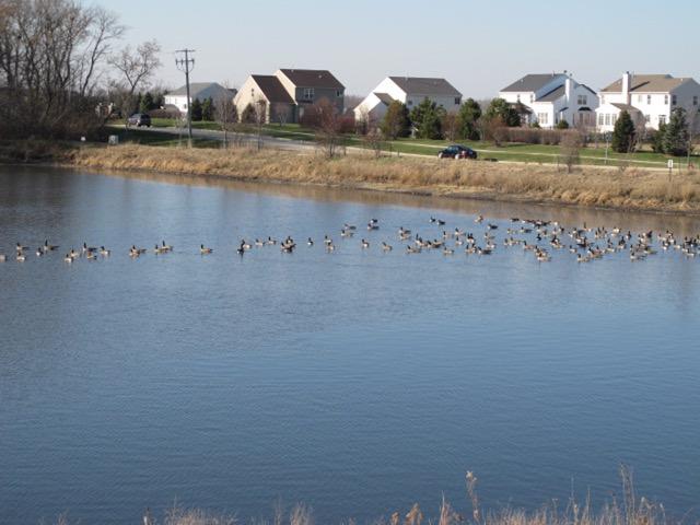 郊外はまだまだ開発の余地がある(イリノイ州ウッドストック市。センテックホームズ社開発区域。以下同)
